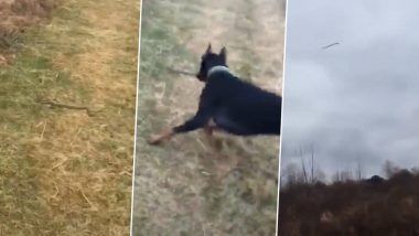 TikTok Video: खेत में दिखा सांप तो मालिक को बचाने के लिए कुत्ते ने किया यह काम, बेजुबान जानवर की वफादारी के सब हुए मुरीद