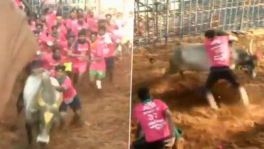 तमिलनाडु: मदुरै में शुरू हुई जल्लीकट्टू प्रतियोगिता, 700 बैल और 730 प्रतियोगी हुए शामिल, देखें वीडियो