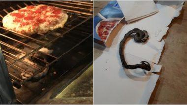 नॉर्थ कैरोलिना: डिनर के लिए कपल बना रहा था पिज्जा, ओवेन में मरे हुए सांप को देख उड़े होश, तस्वीरें हुईं वायरल