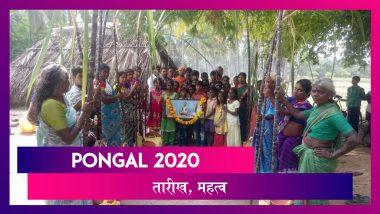 Pongal 2020: दक्षिण भारत का सबसे बड़ा त्योहार पोंगल शुरू, जानें तारीख और महत्व
