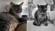 Instagram स्टार बनी यह बिल्ली, अपने Looks को लेकर बटोर रही है सुर्खियां, देखें तस्वीरे