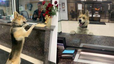 अपने लापता होने की रिपोर्ट लिखवाने खुद पुलिस थाने पहुंचा कुत्ता, मालिक के पास पहुंचने में ऐसे हुआ कामयाब, देखें तस्वीरें