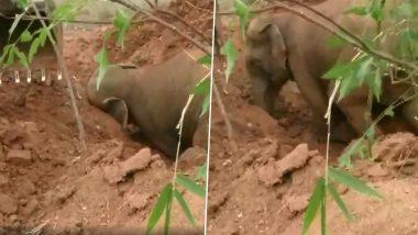 ओडिशा: गंजाम में गड्ढे में गिरा हाथी, वन विभाग के अधिकारियों ने ऐसे बचाई उसकी जान, देखें वीडियो