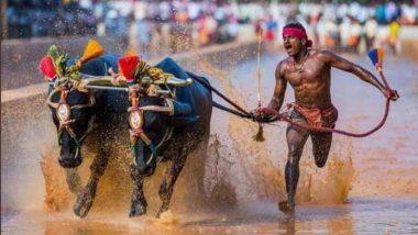 भारत के श्रीनिवास गौड़ा ने भैंसो की रेस में किया कमाल, केवल 9.55 सेकंड में पूरा किया 100 मीटर का फासला, लोग कर रहे हैं उसैन बोल्ट से तुलना