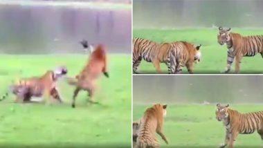 अपने बच्चों को डांटती बाघिन का वीडियो हुआ वायरल, जिसे देखकर आपको भी याद आ जाएगा अपनी मां का प्यार