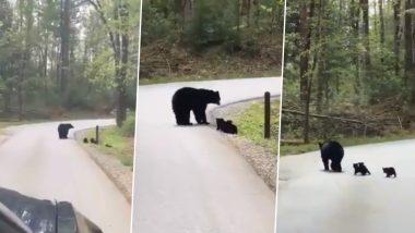 अपने बच्चों के साथ जंगल में सड़क पार करते भालू का वीडियो हुआ वायरल, जिसे देख आप भी कहेंगे SO CUTE