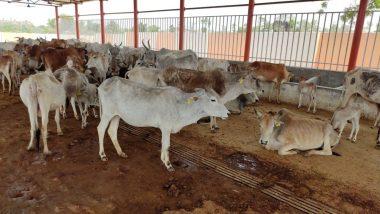 केरल में हैवानियत की सारी हदें पार, 33 साल के शख्स ने गाय के साथ किया दुष्कर्म