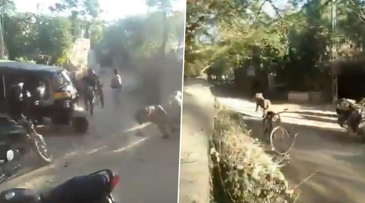 गुजरात: शेर ने गांव वालों की तरफ तेज रफ्तार से लगाई दौड़, घबराए लोगों ने किया कुछ ऐसा... देखें हैरान करने वाला वीडियो