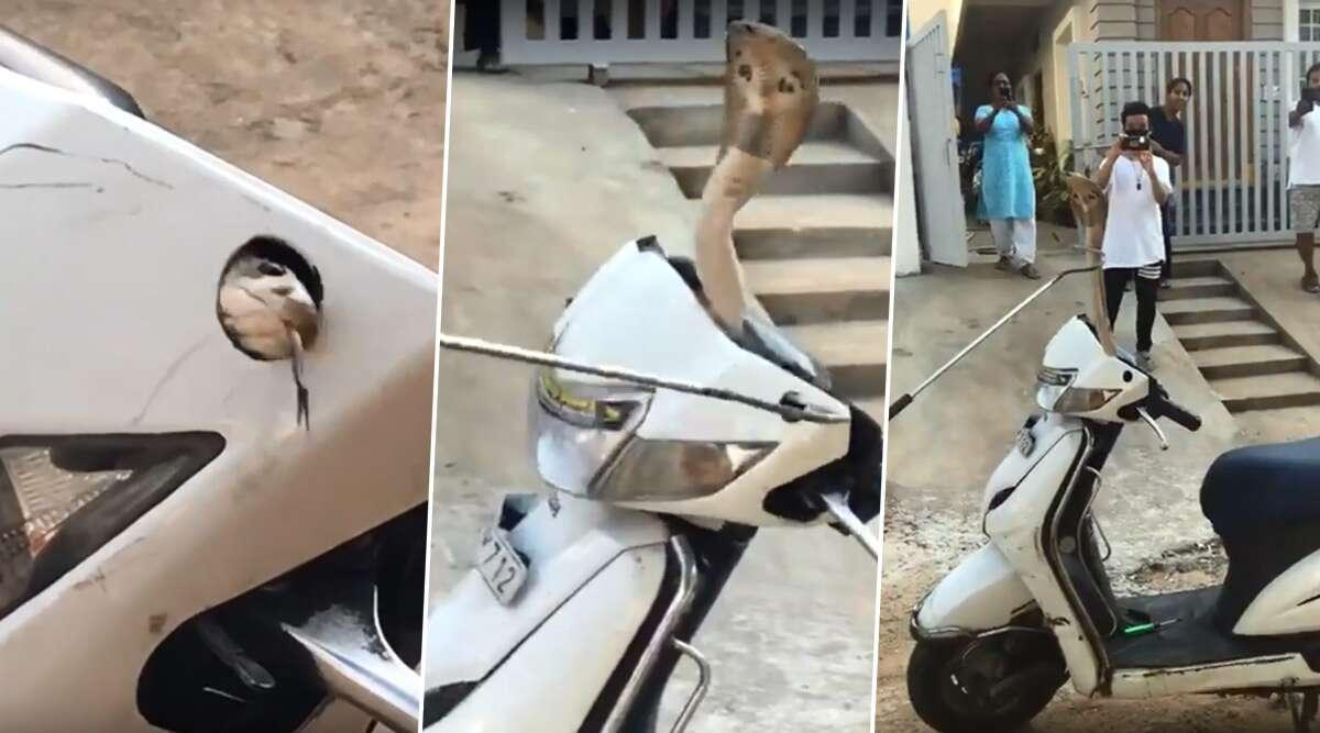 स्कूटी के हैंडल के अंदर बैठा था कोबरा, बाहर आते ही लोगों की निकल गई चीख, देखें वायरल वीडियो