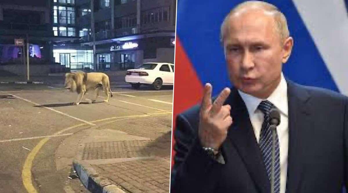 Fact Check: रूस के राष्ट्रपति व्लादिमीर पुतिन ने सड़क पर छोड़े 800 शेर और बाघ ? जानें खबर की सच्चाई