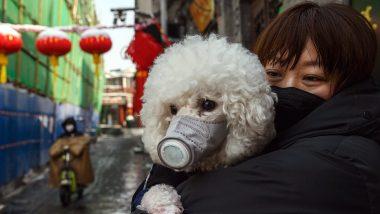 Coronavirus: हांगकांग से आया चौंकाने वाला मामला, इंसान से कुत्ता हुआ संक्रमित