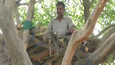 कोरोना वायरस का खौफ: COVID-19 से बचने के लिए हापुर में शख्स ने अपनाया अनोखा तरीका, पेड़ पर बनाया अपना नया आशियाना