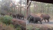 Coronavirus Lockdown: लॉकडाउन के बीच कर्नाटक में सड़क पर चलता दिखा हाथियों का झुंड, वीडियो हुआ वायरल