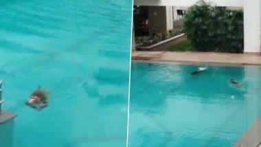 Coronavirus Lockdown: बिल्डिंग के स्विमिंग पूल में Pool Party करते दिखे बंदर, एक्ट्रेस टिस्का चोपड़ा ने शेयर किया वीडियो, आप भी देखें