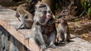 Coronavirus Lockdown: हिमाचल प्रदेश में लॉकडाउन का असर, ग्रामीण इलाकों में पहुंचा भूखे बंदरों का झुंड, फसलों को पहुंचा रहे हैं नुकसान