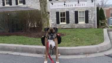 Coronavirus: अमेरिका में क्वारेंटाइन में रह रहे लोगों तक Wine पहुंचा रहा है कुत्ता, तस्वीरें और वीडियो सोशल मीडिया पर वायरल, आप भी देखें