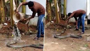 फन फैलाकर बैठे कोबरा सांप को नहलाने लगा शख्स, वायरल वीडियो देख आप भी हो जाएंगे हैरान