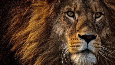 गुजरात में 4 शेरों ने एम्बुलेंस को घेरकर लगाया चक्कर, महिला ने इस दौरान वैन में दिया बच्ची को जन्म