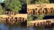 घाट पर एक साथ पानी पीते दिखा शेरों का झुंड, सोशल मीडिया पर वायरल हुआ ये दुर्लभ वीडियो, आप भी देखें