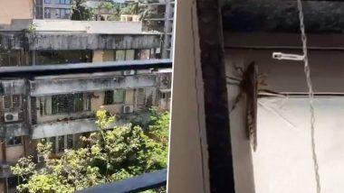 Locusts Seen in Mumbai? विक्रोली, जुहू और शहर के दूसरे क्षेत्रों में टिड्डियों के देखे जाने की तस्वीरें व वीडियो देख हैरत में पड़े लोग, (Check Tweets)