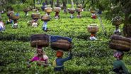 कोरोना संकट: पश्चिम बंगाल सरकार का बड़ा फैसला, राज्य में 1 जून से चाय के बगानों में कार्य करने वाले कर्मचारियों को 100 प्रतिशत काम करने की दी अनुमति