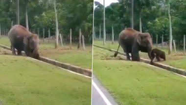 नाले में गिरा नन्हा हाथी तो उसकी मां ने ऐसे बचाई जान, देखें दिल को छू लेने वाला यह वायरल वीडियो