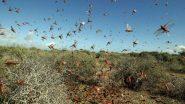 टिड्डी दल का हमला: पौधों के लिए प्रलयंकारी टिड्डी का गहराता प्रकोप, पंजाब और मध्यप्रदेश में किया प्रवेश