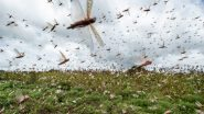 Locust Swarm: पाकिस्तान से निकलकर यूपी के झांसी में आतंक मचा रहा है टिड्डी दल, कीटनाशक की मदद से करीब 3Km लंबे झुंड को भगाने की कोशिश