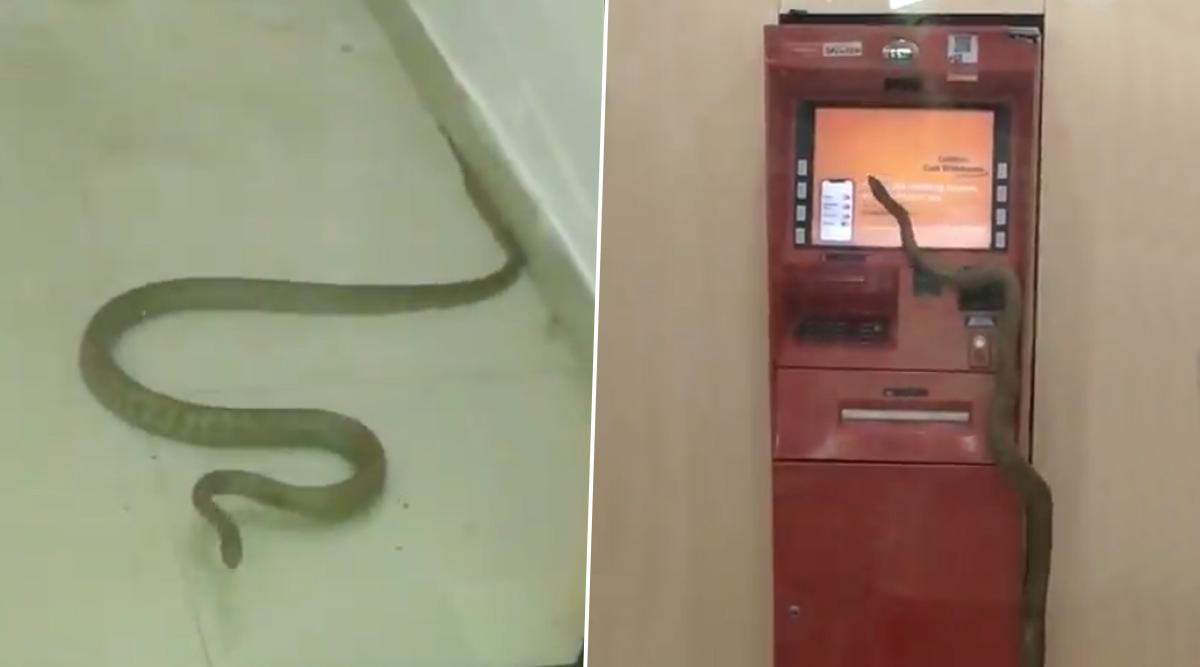 Shocking: गाजियाबाद के ATM के अंदर घुसा सांप, वायरल वीडियो को देख आप भी हो जाएंगे हैरान