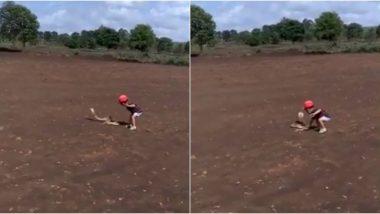 कर्नाटक: बेलगाम में पिता के साथ खेलते समय King Cobra को पकड़ने की कोशिश करता दिखा छोटा बच्चा, सोशल मीडिया पर वायरल हुआ वीडियो