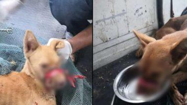 शर्मनाक! केरल में फिर जानवर के साथ हैवानियत का मामला, कुत्ते के मुंह को टेप से बांधा