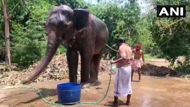 अनोखी मिसाल! बिहार के एक शख्स ने अपने दो हाथियों के नाम लिखी पूरी जायदाद, बोले- ये इंसानों से ज्यादा वफादार