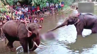 Pregnant Elephant Death In Kerala: गर्भवती हथिनी की मौत के मामले में दो गिरफ्तार, राज्य वन मंत्री ने कहा- जल्द ही सभी पकड़े जाएंगे