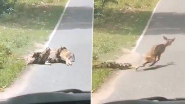 अजगर के चंगुल से हिरण को बचाकर क्या इस शख्स ने तोड़ा 'प्रकृति का नियम'? वीडियो वायरल होने के बाद ट्विटर पर छिड़ी बहस