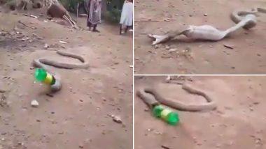 शिकार समझकर प्लास्टिक की बोतल निगल गया King Cobra, जान पर बनी आफत तो की ऐसी हरकत...(Watch Viral Video)