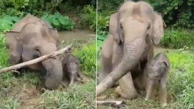 नन्हे हाथी के रास्ते में पेड़ की टहनी बनी बाधा तो हथिनी ने ऐसे की अपने बच्चे की मदद, आपका मन मोह लेगा ये वायरल वीडियो