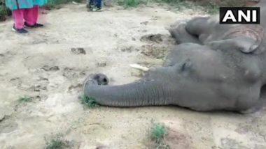 छत्तीसगढ़: रायगढ़ जिले में करंट लगने से हुई हाथी की मौत, मामले में FIR दर्ज, दो लोग गिरफ्तार
