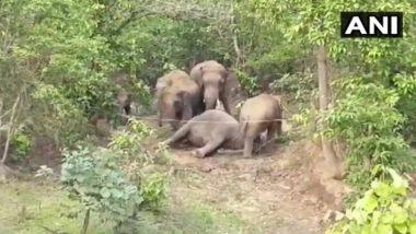 Elephants Death: छत्तीसगढ़ के जंगल में हाथिनी के शव के आसपास डटा हाथियों का झुंड, पिछले दो दिन में मौत की दूसरी घटना
