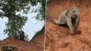जंगल में मिट्टी पर sliding का लुत्फ उठाते छोटे हाथी का वीडियो हुआ वायरल, जिसे देख आपको भी आ जाएगी अपने बचपन की याद