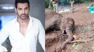 गर्भवती हथिनी की क्रूर हत्या पर भड़के जॉन अब्राहम, सोशल मीडिया पर शेयरकी दिल दहला देने वालीतस्वीरें