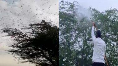 Locust Attack: राजस्थान में टिड्डी दल का हमला जारी, जयपुर के फागी इलाके में टिड्डियों को भगाने के लिए किया गया केमिकल का छिड़काव (Watch Video)
