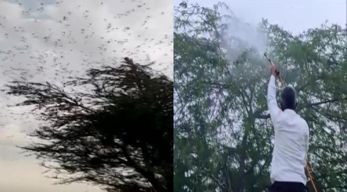 Locust Attack: उत्तर प्रदेश में टिड्डियों का हमला, प्रशासन ने जारी किया अलर्ट