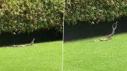 Snake Mating: रोमांटिक हुआ सांप का जोड़ा, नाग-नागिन के मेटिंग डांस का वीडियो हुआ वायरल (Watch Video)