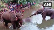 Pregnant Elephant Death In Kerala: गर्भवती हथिनी की मौत के मामले में कार्रवाई, अज्ञात लोगों के खिलाफ FIR दर्ज, पटाखों से भरा अनानास खाने के चलते गई जान