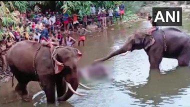 Another Elephant Death In Kerala: इंसानियत फिर हुई शर्मसार! गर्भवती हथिनी के बाद केरल में एक और हाथी की पटाखे वाले भोजन से मौत