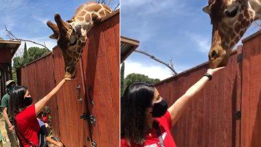 सनी लियोनी ने कोरोना के इस कहर के बीच की जानवरों की मदद, जिराफ को खाना खिलाती आई नजर