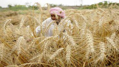 Monsoon 2020: मानसून हुआ मेहरबान, खरीफ बुवाई में 104 फीसदी का इजाफा
