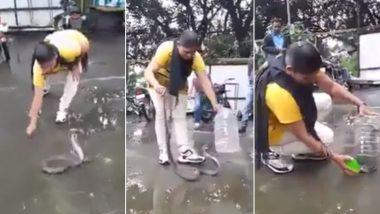 King Cobra Caught With Bare Hands: जांबाज महिला ने हाथ से कोबरा को पकड़कर जार में किया बंद, बहादुरी के कायल हुए लोग (Watch Video)
