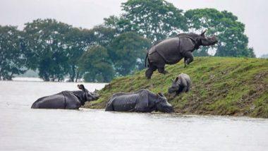 असम: काजीरंगा नेशनल पार्क और बोकाहाट टाइगर रिजर्व में बाढ़ से मची तबाही, 14 गैंडों समेत 129 जानवरों की मौत