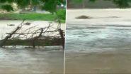 Gujarat Rains Video: राजकोट में बारिश का कहर, बाढ़ में बहे कई मवेशी